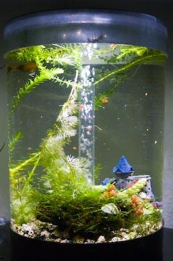 Futter klappschildkr te moschusschildkr te for Schnecken im aquarium