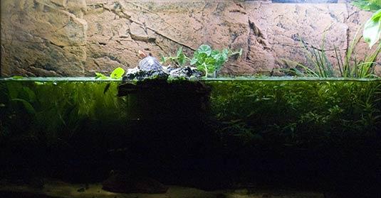 wie warm muss ein aquarium sein