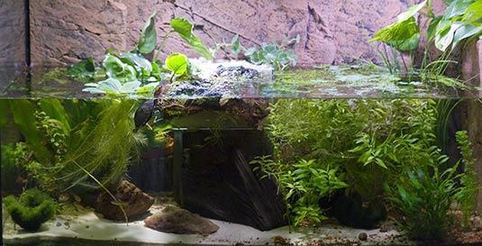 Unterbringung Aquaterrarium Fur Klappschildkroten Kinosternon